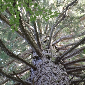 Der Duft der Bäume