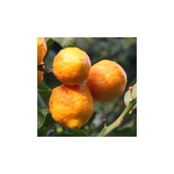 O - wie Orange