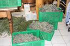 gesammelte Kräuter bereit zum destillieren