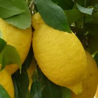 Z - wie Zitrone