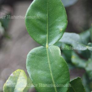 Combava-Petitgrain (10 ml)