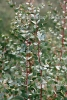 Eukalyptus spezial BIO (5 ml)