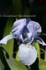 Iris abs. fine (1 ml)
