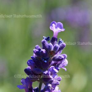 Lavendel CO2 (5 ml)