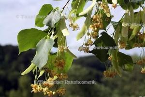 Lindenblüten abs. (1 ml)