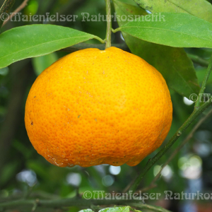 Mandarine gelb (10 ml)