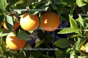 Orange dest. terpenarm (10 ml)