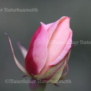 Rose - Tee-Rose (1 ml)