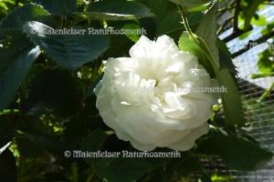 Rose weiß BIO (1 ml)