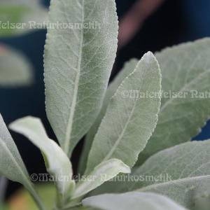 Salbei - White sage fresh extra (1 ml)