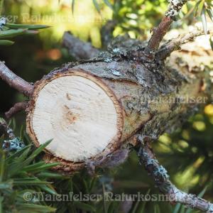 Wacholderholz spezial Bio (5 ml)
