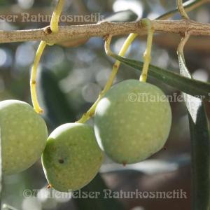 Olivenöl BIO - Kreta