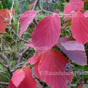 Herbst (10 ml)