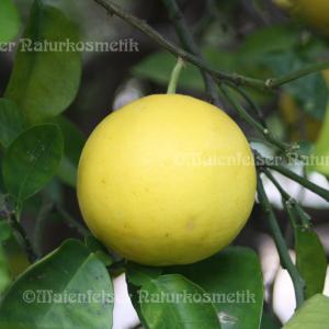 Grapefruit 1a (10 ml)