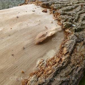 Eichenholz CO2 (2 ml)