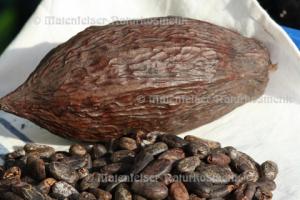 Kakao abs. Bio (2 ml)