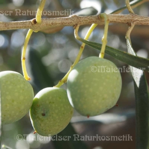 Olivenöl BIO Kreta Klein (60 ml)
