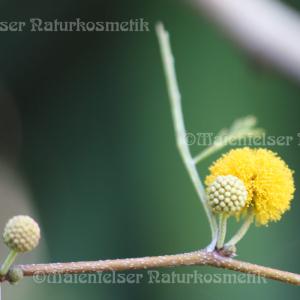Akazienblütenwachs (7 ml)