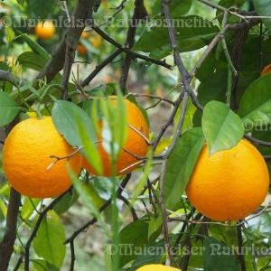 Orange süß 1a BIO