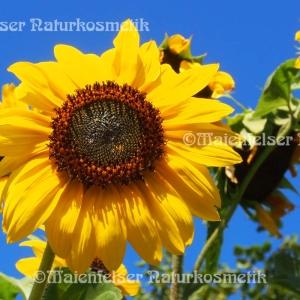 Sonnenblumenblütenöl (2ml)