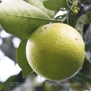 Grapefruitkernextrakt (GKE)