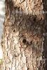 Cedernholz 1a (10 ml)