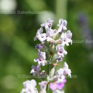Lavendel Himal (10 ml)