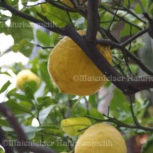 Zitrone extra BIO (10 ml)